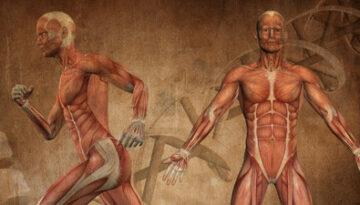 la-ciencia-de-la-memoria-muscular