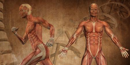La ciencia de la memoria muscular 5