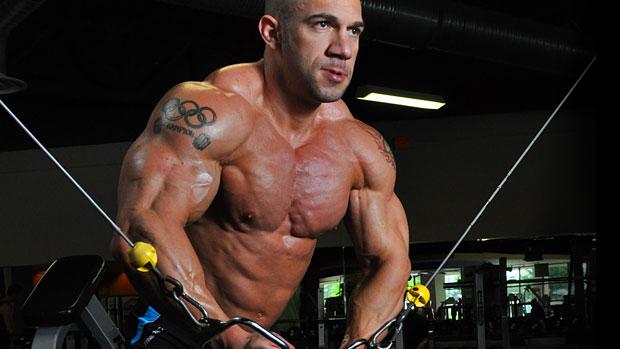 Fisiología aplicada II: Composición de los músculos 2