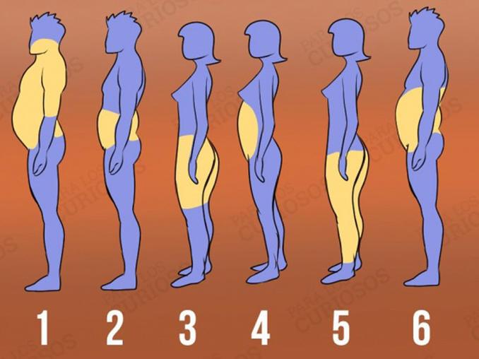 ¿Cómo se acumula la grasa en el cuerpo? 5