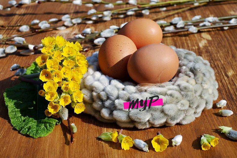 El huevo 1