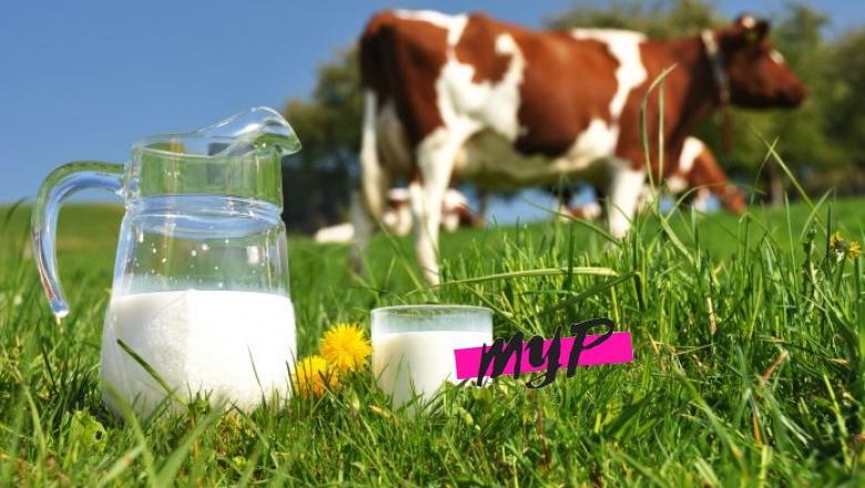 La leche de vaca 1