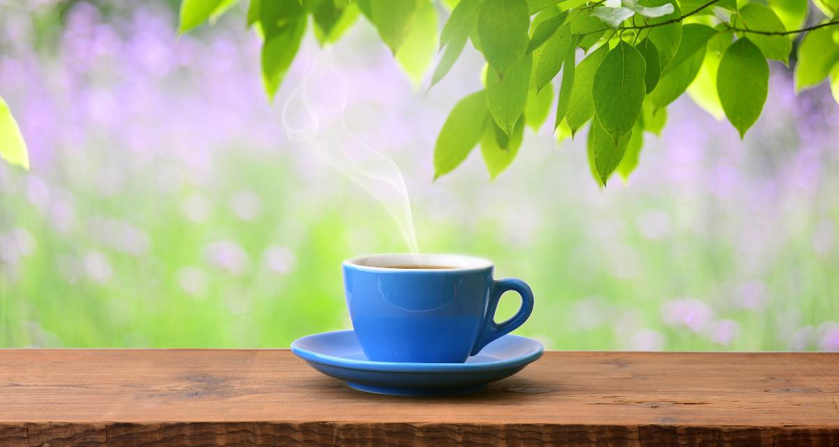 Beneficios del té de malva y contraindicaciones. 13