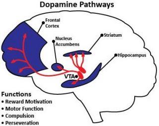 ¿Qué es la dopamina y es extra? 2