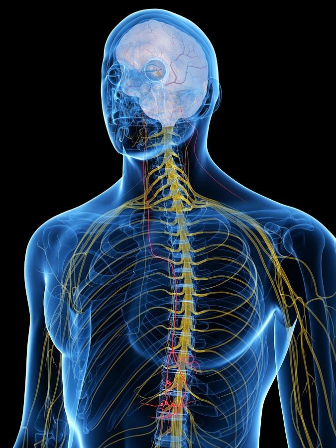 El nervio vago, neurotransmisores y hormonas 1
