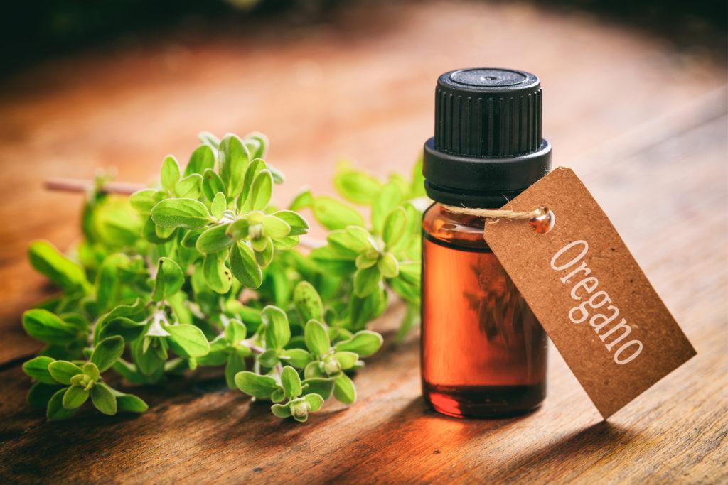 4 beneficios del orégano (y su aceite esencial) 1