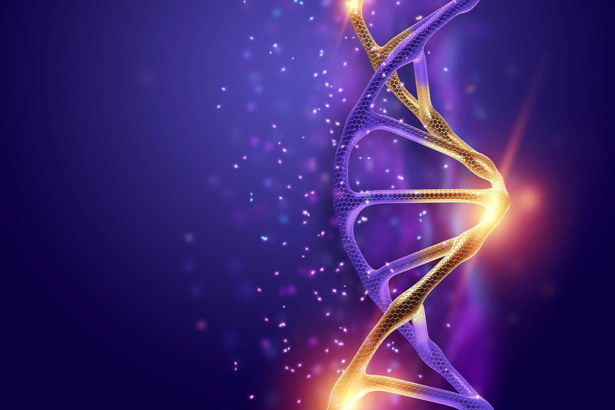 Todo sobre el gen BDNF: la versión rs6265 3