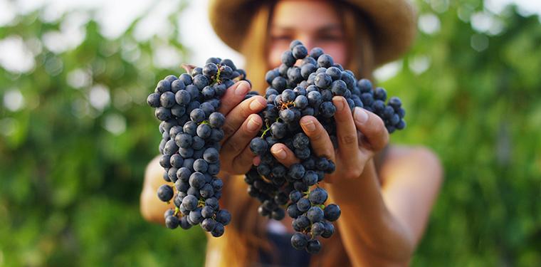 Efectos secundarios, dosis y revisiones del extracto de semilla de uva (GSE) 1