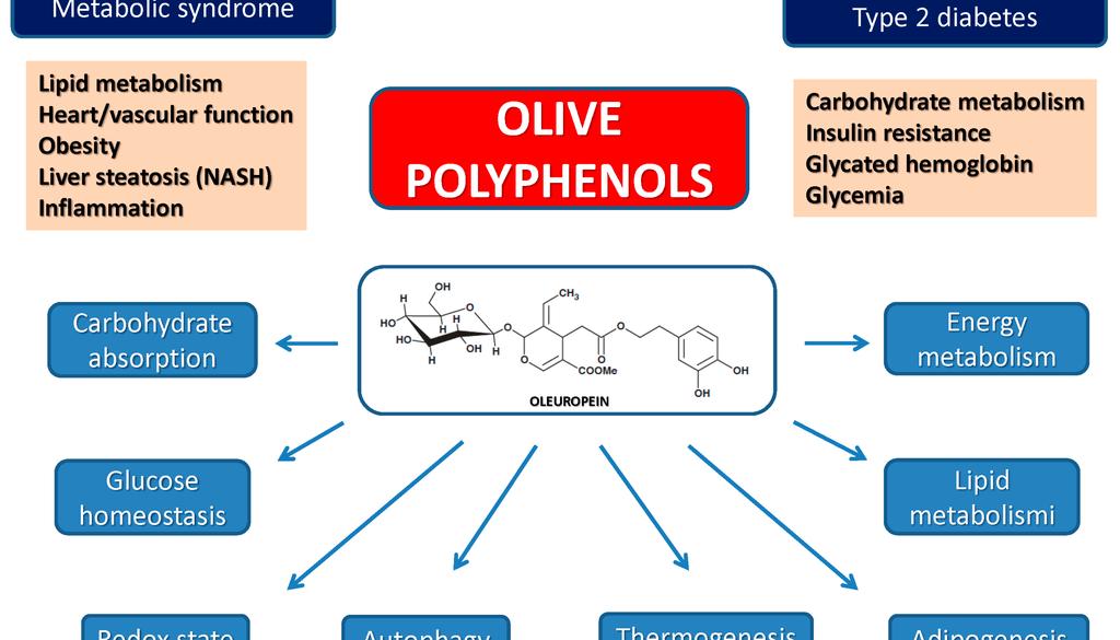 Olive-Phenols.png