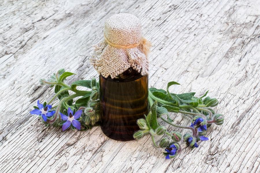Los 7+ beneficios del aceite de borraja + efectos secundarios y precauciones 1