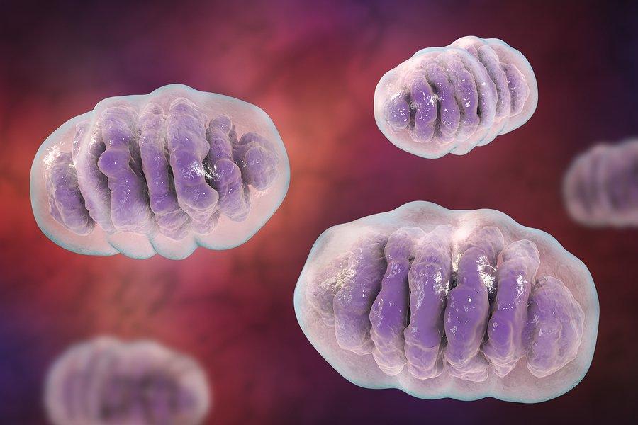 Beneficios potenciales de las revisiones, dosis y efectos secundarios de MitoQ + 1