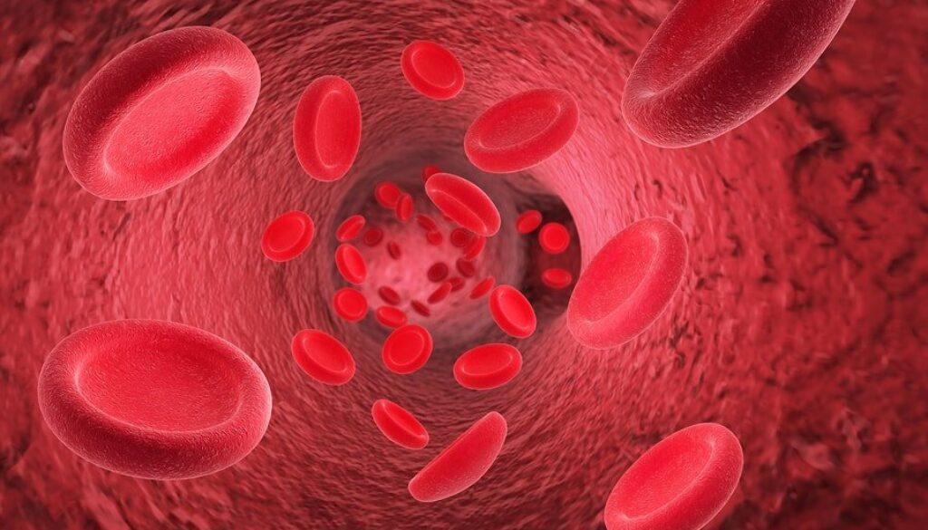 bigstock-Red-Blood-Cells-Erythrocytes-I-184534489-min.jpg