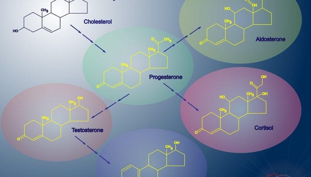 bigstock-Steroidogenesis-23181332-min.jpg