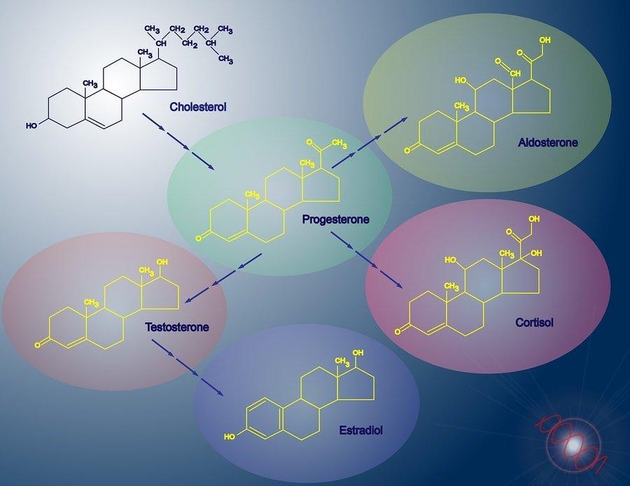 Función de la enzima CYP11A1, genes y cómo aumentar / disminuir 1