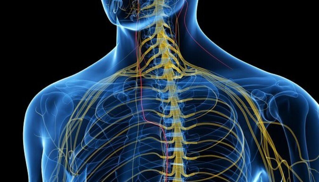 bigstock-d-rendered-medically-accurate-207616015-min.jpg