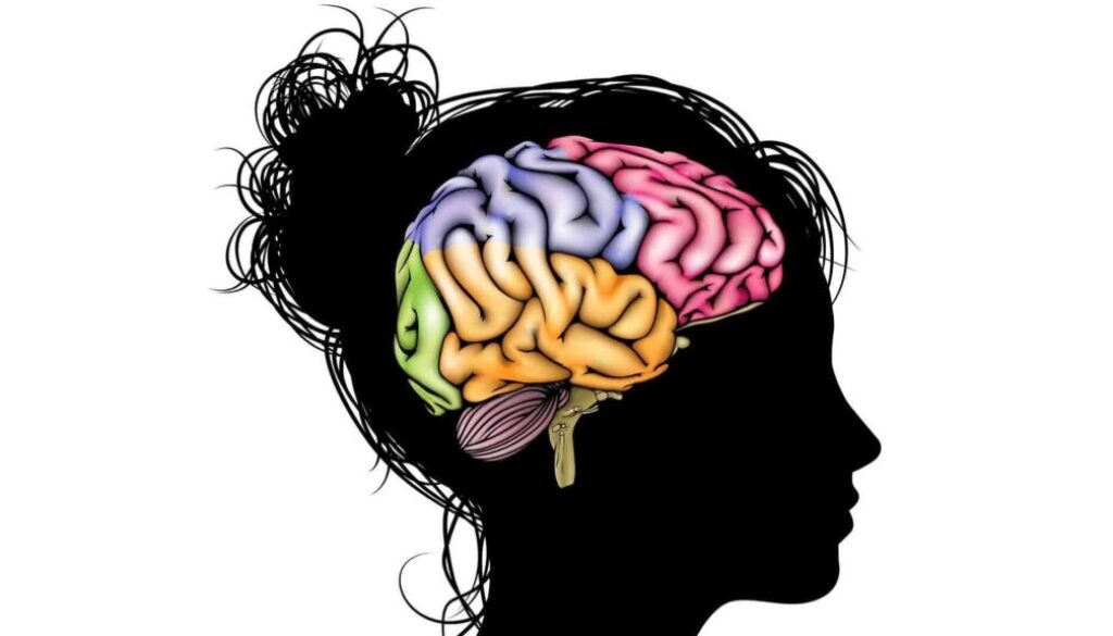 girl-brain.jpg