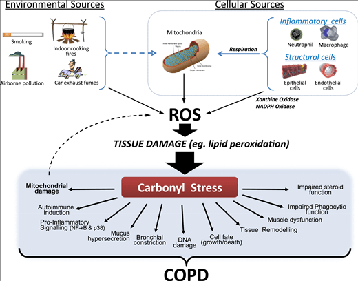 ¿Qué es el estrés oxidativo? El impacto de los radicales libres en la salud 1