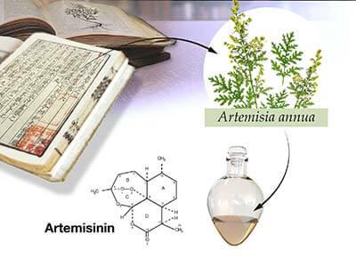 Artemisinina: tratamiento de la malaria + futuras investigaciones y advertencias 1