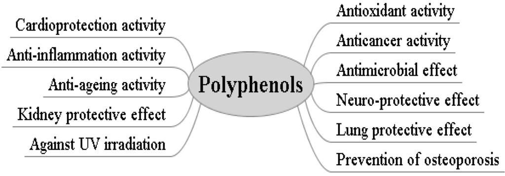 7 beneficios potenciales de los polifenoles de manzana 1