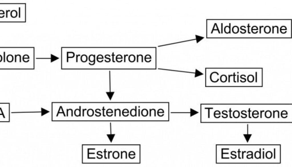 steroid-pathway.jpg