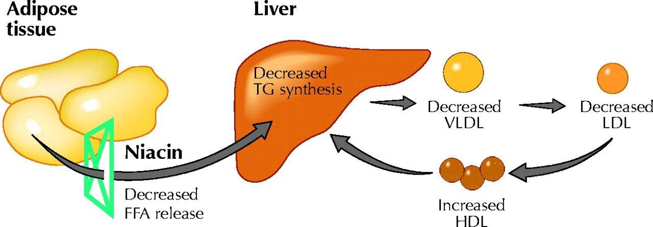 Beneficios para la salud de la niacina (vitamina B3) + fuentes y dosis 1